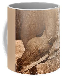Sunlight And Grace Coffee Mug