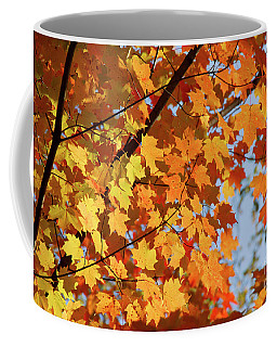 Coffee Mug featuring the photograph Sunlight In Maple Tree by Elena Elisseeva