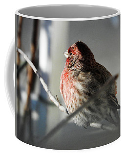 Sunlight On My Feathers Coffee Mug by Janice Adomeit