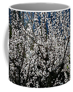 Sunlit Apricot Blossoms Coffee Mug by Will Borden
