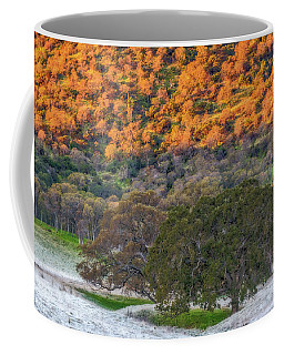 Sunlit Hillside And Frost Coffee Mug