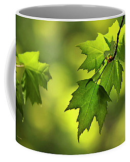 Sunlit Maple Leaves In Spring Coffee Mug by Christina Rollo