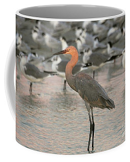 Sunlit Reddish Egret Coffee Mug by Myrna Bradshaw