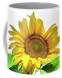 Coffee Mug featuring the photograph Sunny Flower by Jenny Rainbow