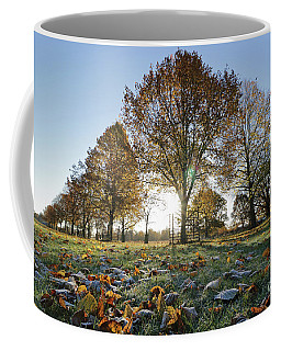 Sunrise Through Lime Trees Coffee Mug