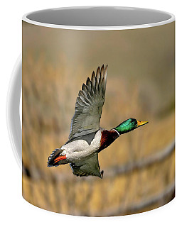 Coffee Mug featuring the photograph Sunset Mallard by Ronnie and Frances Howard