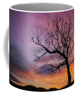 Coffee Mug featuring the photograph Sunset Tree by Darren White