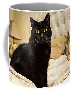 Coffee Mug featuring the photograph Sunshine by Lawrence Burry