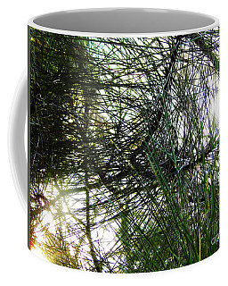Sunshine Through Pine Needles Coffee Mug