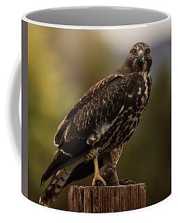 Swainson's Hawk Coffee Mug