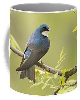 Swallow Coffee Mug by Mircea Costina Photography