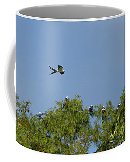 Swallow-tailed Kite Flyover Coffee Mug by Paul Rebmann