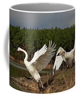 Swan Fight Coffee Mug