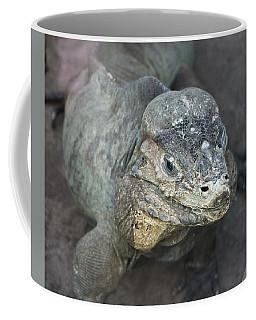 Coffee Mug featuring the photograph Sweet Face Of Rhinoceros Iguana by Miroslava Jurcik