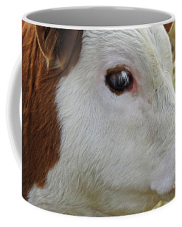 Sweet Georgia Brown - Cow Photo #608 Coffee Mug by Ella Kaye Dickey