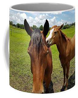 Sweet Horses  Coffee Mug
