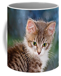 Sweet Kitten Coffee Mug