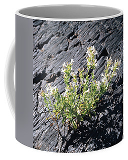 T-107709 Hot Rock Penstemon Coffee Mug
