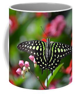 Tailed Jay4 Coffee Mug
