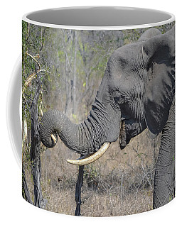 Coffee Mug featuring the photograph Talented Trunk by Jeff at JSJ Photography