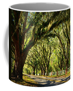 Tallahassee Canopy Road Coffee Mug by Carla Parris