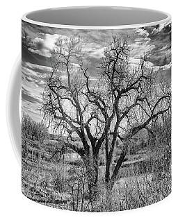 Tangled Old Tree On Platte River Coffee Mug