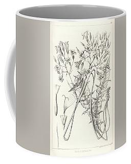 Taper Tip Hawksbeard, Crepis Acuminate Coffee Mug