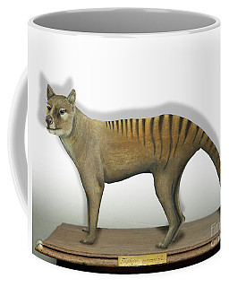 Tasmanian Tiger-thylacinus Cynocephalus-tasmanian Wolf-lobo De Tasmania-tasmanian Loup-beutelwolf    Coffee Mug