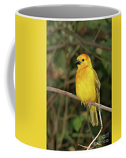 Taveta Golden Weaver #2 Coffee Mug