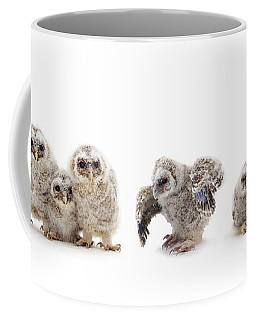 Tawny Owl Family Coffee Mug