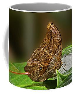 Tawny Owl Coffee Mug by Ronda Ryan