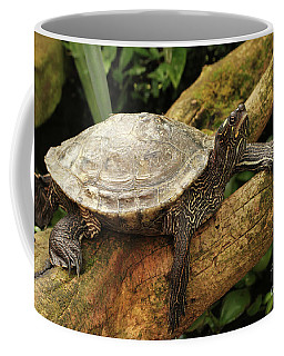 Tess The Map Turtle #3 Coffee Mug
