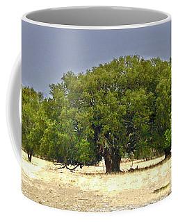 Coffee Mug featuring the photograph Texas Live Oaks by Susan Crossman Buscho