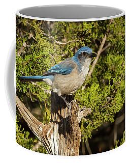 Texas Scrub Jay  Coffee Mug