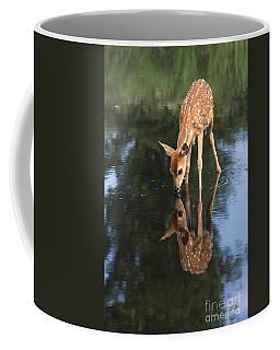 White-tailed Deer Photographs Coffee Mugs