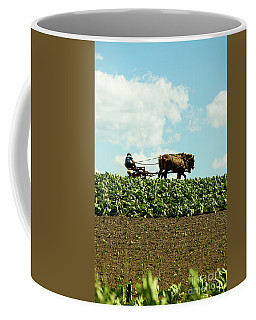 The Amish Farmer With Horses In Tobacco Field Coffee Mug