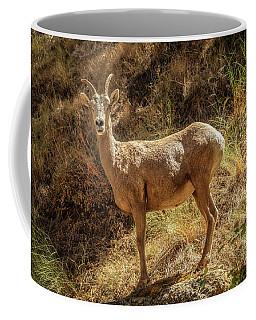 The Argali  Coffee Mug