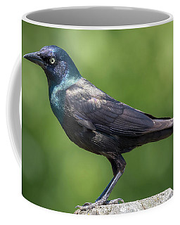 Coffee Mug featuring the photograph The Beautiful Common Grackle by Ricky L Jones