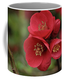 The Blooming Red Quince Coffee Mug by Connie Handscomb