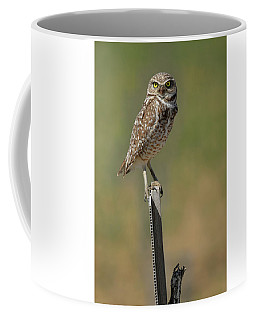 The Burrowing Owl Coffee Mug by Steve McKinzie