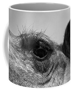 The Camels Eye  Coffee Mug