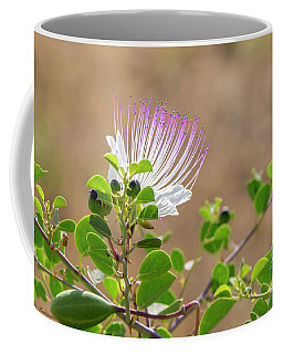 The  Caper Flower Blossoms. Coffee Mug