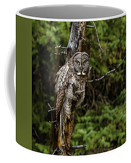 The Captivating Great Grey Owl Coffee Mug by Yeates Photography