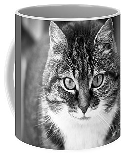 The Cat Stare Down Coffee Mug