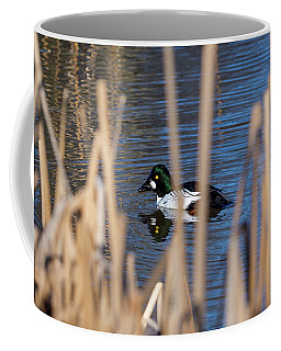 The Common Goldeneye Male Coffee Mug