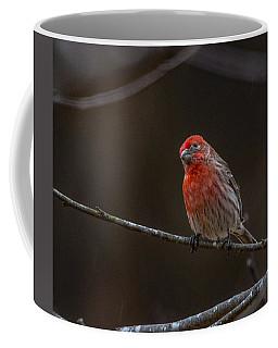 The Curious House Finch  Coffee Mug