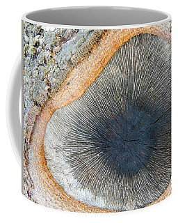 The Eye Of The Tree Coffee Mug
