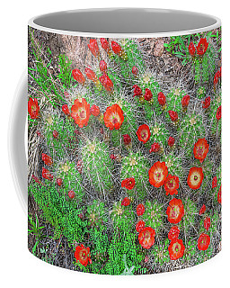 The First Week Of May, Claret Cup Cacti Begin To Bloom Throughout The Colorado Rockies.  Coffee Mug by Bijan Pirnia