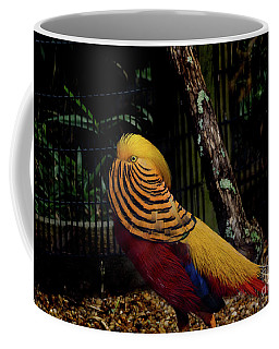 The Golden Pheasant Or Chinese Pheasant -atlanta Ga, Zoo Coffee Mug