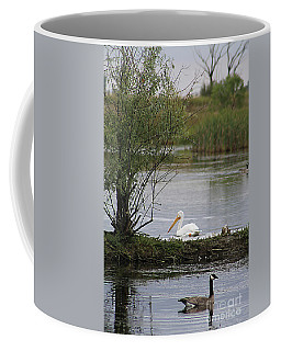 Coffee Mug featuring the photograph The Goose And The Pelican by Alyce Taylor
